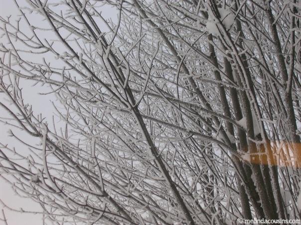 Rigi Trees